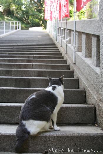 江ノ島猫たち_b0153363_20215551.jpg