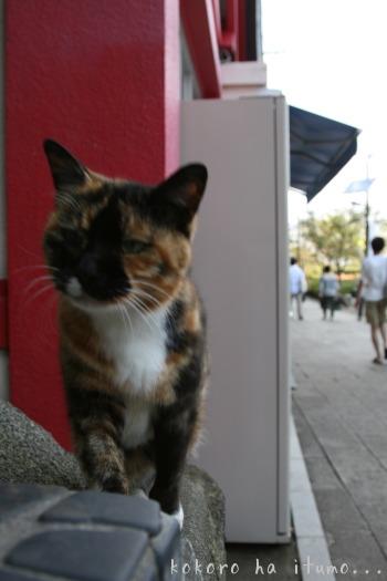 江ノ島猫たち_b0153363_20272136.jpg