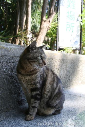 江ノ島猫たち_b0153363_2092961.jpg