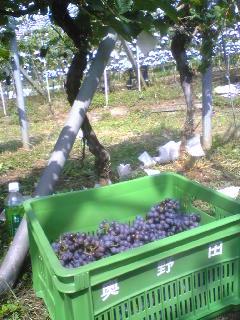 収穫中〜_b0016474_10272640.jpg