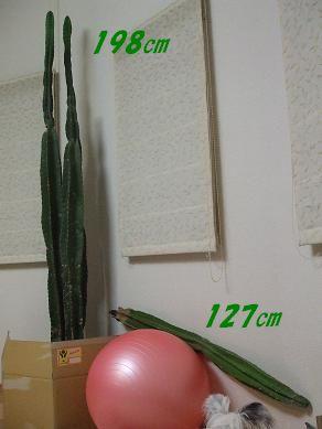 f0179203_8123791.jpg