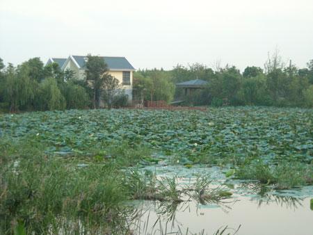 上海ーエコ公園(顧村公園)_b0076008_2294536.jpg