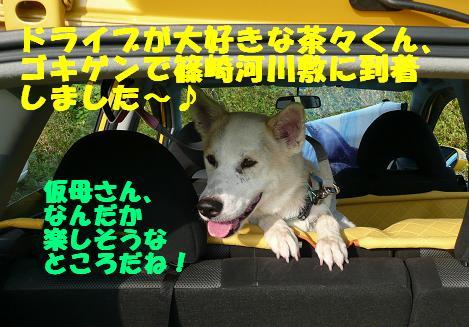 篠崎いぬ親会に参加しました♪_f0121712_22223430.jpg
