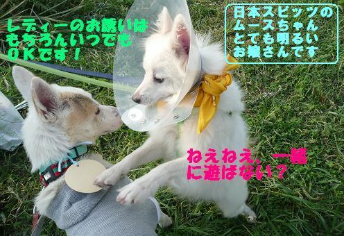 篠崎いぬ親会に参加しました♪_f0121712_22542421.jpg