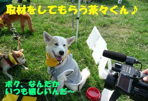 篠崎いぬ親会に参加しました♪_f0121712_2258303.jpg