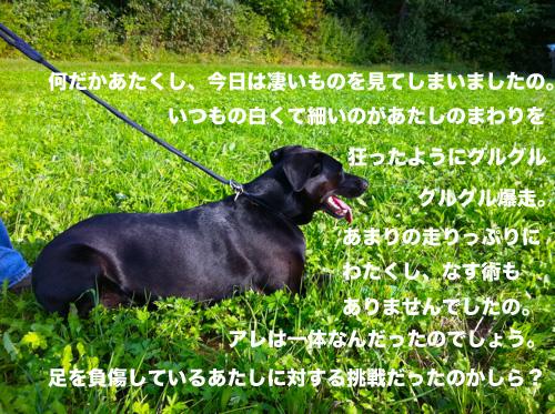 c0198524_810453.jpg