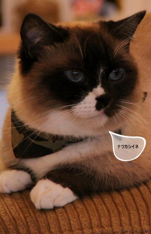 今日でラスト!原宿「cat room chamamo」_d0167436_8113758.jpg