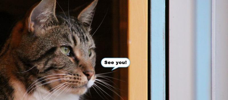 今日でラスト!原宿「cat room chamamo」_d0167436_84959.jpg