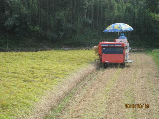 実家で稲刈りの手伝い_e0121558_2230112.jpg