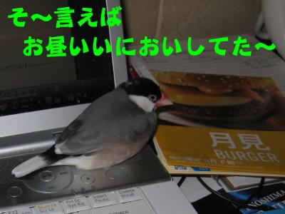 b0158061_202383.jpg