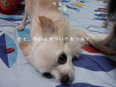 e0059267_184888.jpg