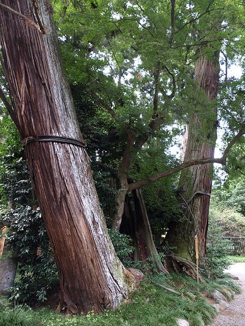 香取神宮と息栖神社 (9/19)_b0006870_2336141.jpg