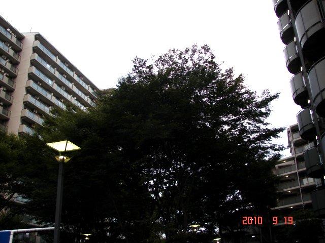 f0104277_5531935.jpg