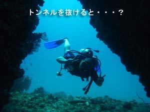 今日が本番、ピピ島ダイビング♪_f0144385_22371716.jpg
