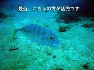 今日が本番、ピピ島ダイビング♪_f0144385_22375548.jpg