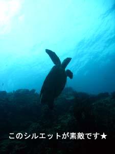 今日が本番、ピピ島ダイビング♪_f0144385_22382911.jpg