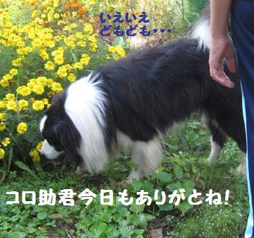 f0212597_11154974.jpg