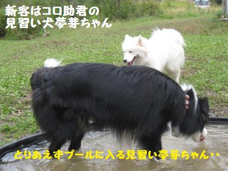 f0212597_1133772.jpg