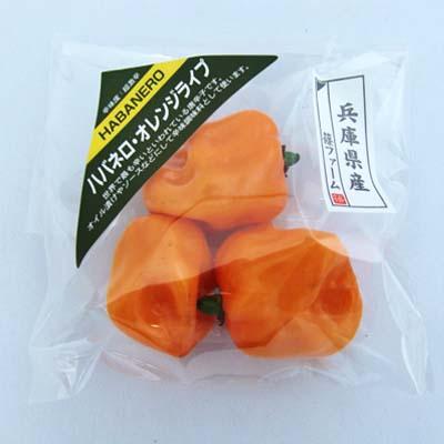 ハバネロ・オレンジライプ_c0189002_14455496.jpg