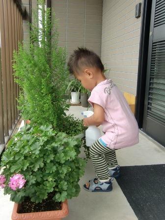 植物を育てる_a0128408_18423133.jpg