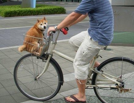 シャンプーの後は自転車のかご ...