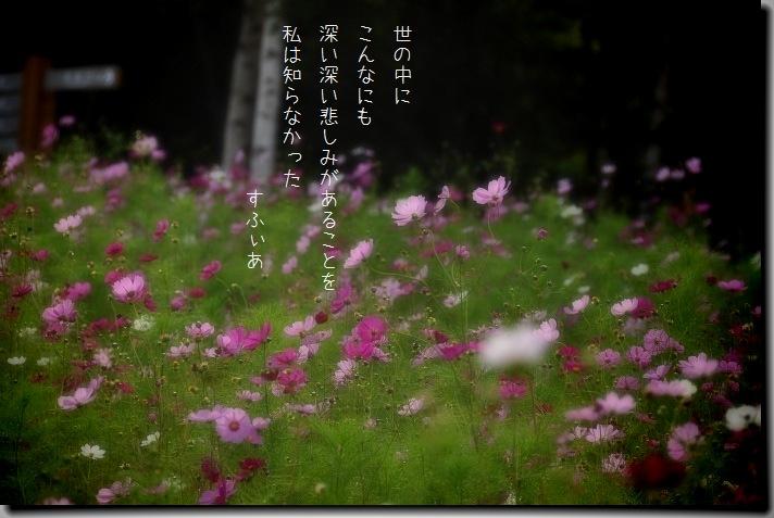 b0152416_16201739.jpg