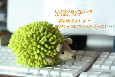 f0181018_2234502.jpg