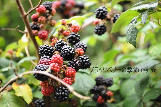 ポテト&リークスープ&自然の中をお散歩しよう☆_d0104926_261794.jpg