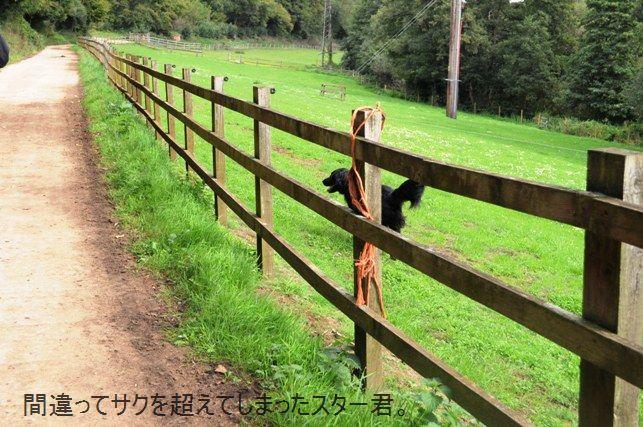 ポテト&リークスープ&自然の中をお散歩しよう☆_d0104926_291168.jpg