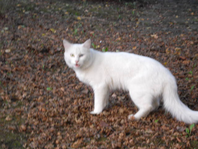 ハーブ畑で見た白猫_d0116059_2213731.jpg