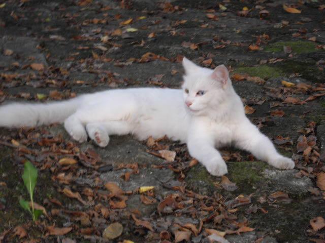 ハーブ畑で見た白猫_d0116059_222411.jpg
