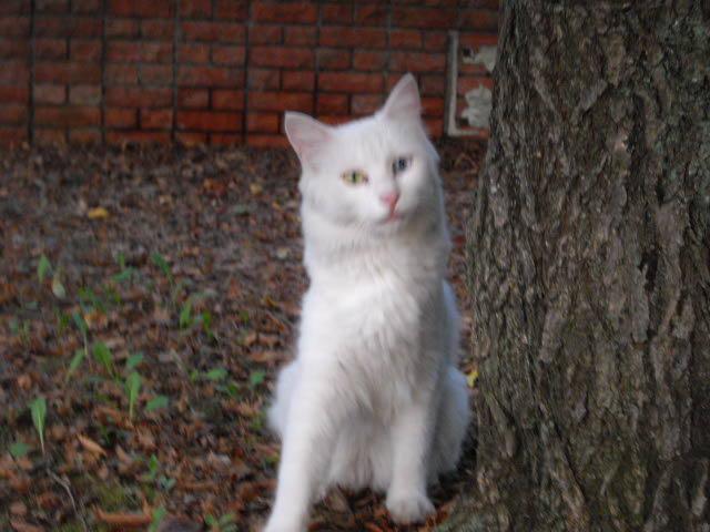 ハーブ畑で見た白猫_d0116059_224292.jpg