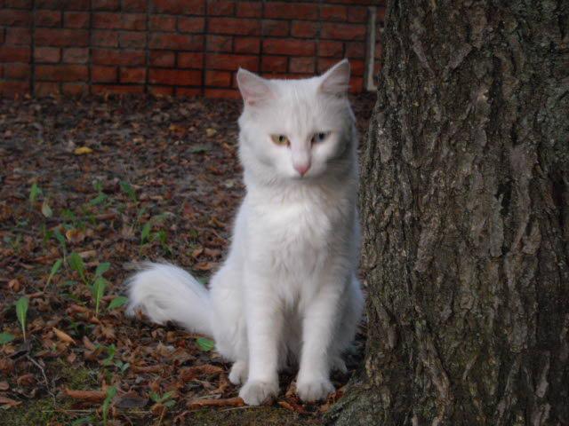 ハーブ畑で見た白猫_d0116059_226763.jpg