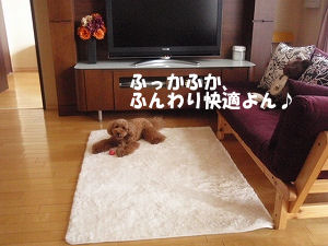 c0135363_332490.jpg