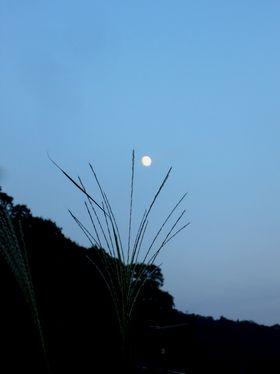 一日早いお月見_b0102572_22393652.jpg