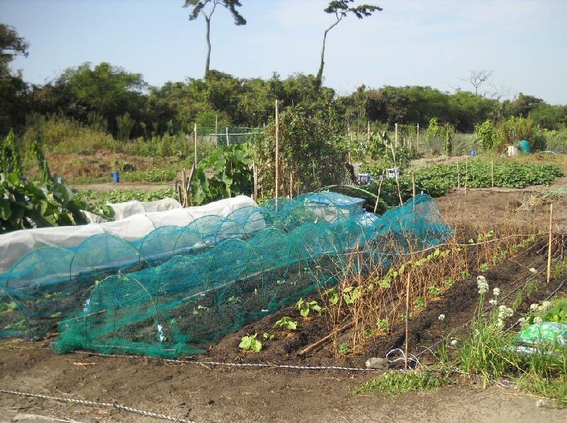 ジャンボニンニクの植え付けとジャガイモ植え直し_f0018078_1701142.jpg