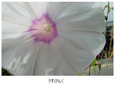 c0012180_081631.jpg
