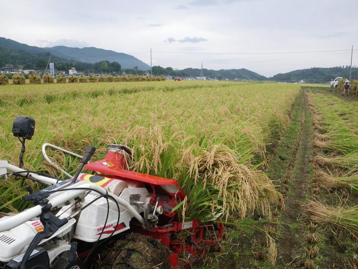 我が家の稲刈り_f0170180_20375216.jpg