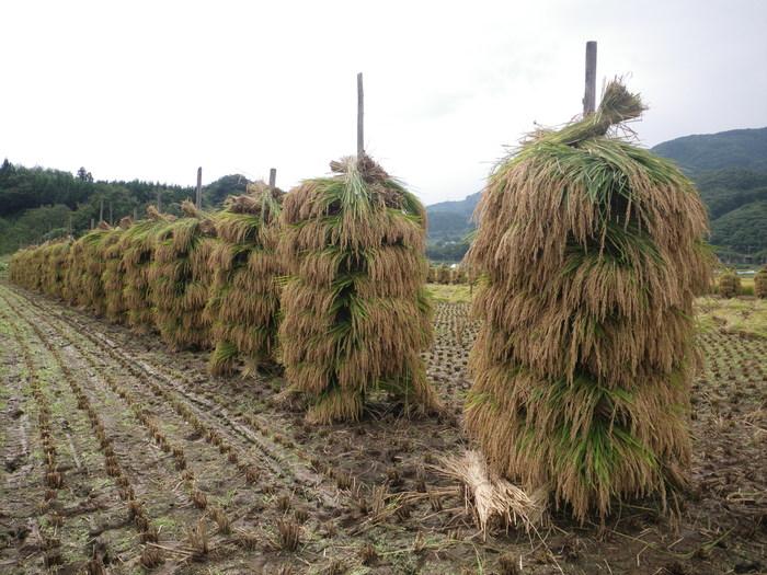 我が家の稲刈り_f0170180_20381976.jpg