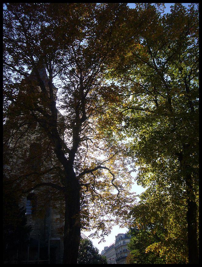 【街角スナップ】気温が上がったパリの街角から・・・(サンジェルマン界隈)PARIS_a0008105_16594465.jpg
