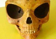 シーランドの頭がい骨:宇宙人の頭がい骨が見つかった!_e0171614_11133758.jpg
