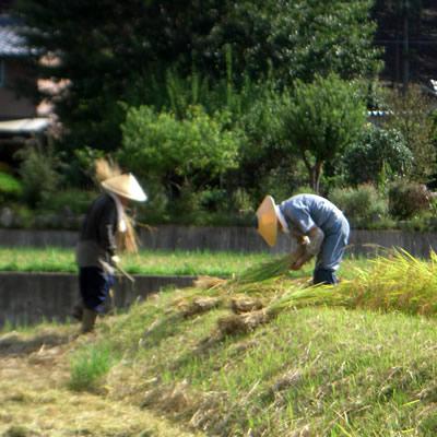 収穫の秋_d0063218_1134231.jpg