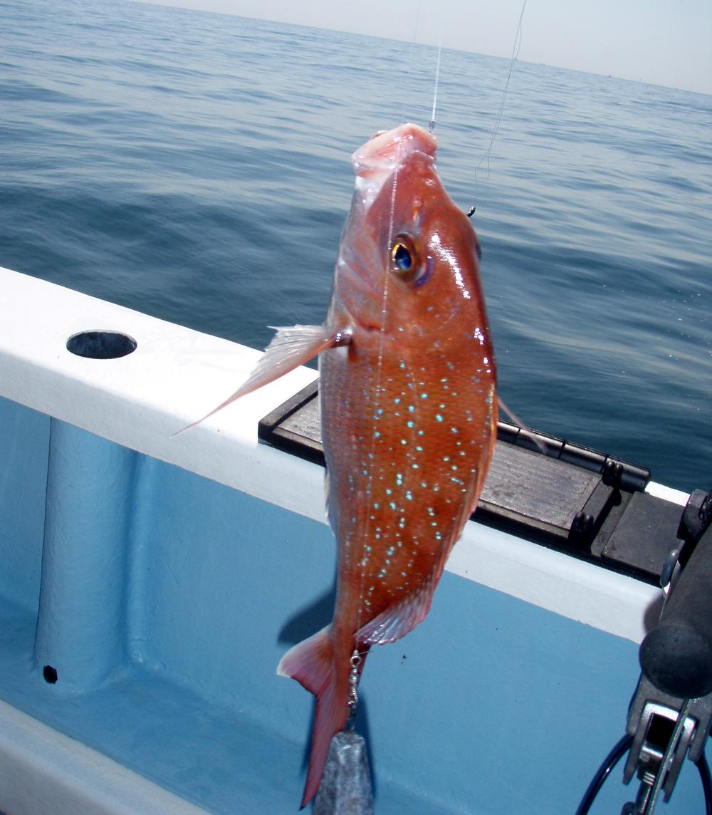 2010年9月22日(水) 知多半島 大井港より釣行_d0171823_2336286.jpg