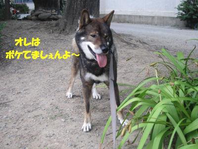 f0143123_2011420.jpg