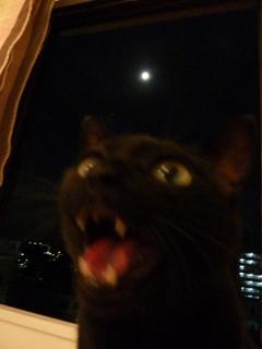中秋の名月猫 のぇる編。_a0143140_21373032.jpg