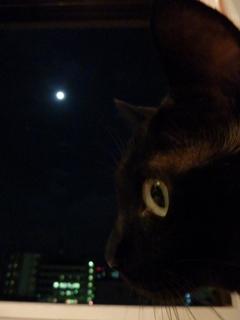 中秋の名月猫 のぇる編。_a0143140_21382387.jpg