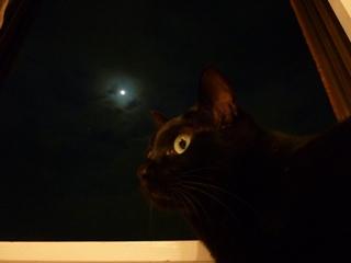 中秋の名月猫 のぇる編。_a0143140_21395513.jpg