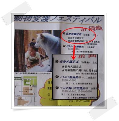 シロちゃんに会いに_c0049950_15575490.jpg