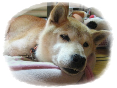 シロちゃんに会いに_c0049950_17265195.jpg
