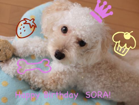 HAPPY BIRTHDAY SORA!_e0158653_234414.jpg